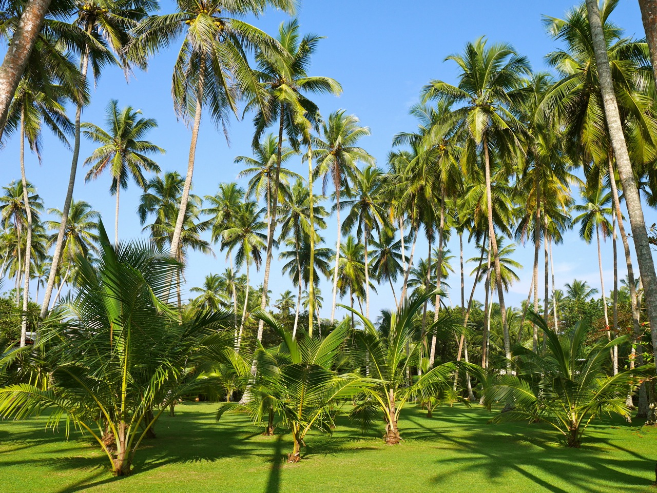 SriLanka OWF-Guesthouse Palmtrees2