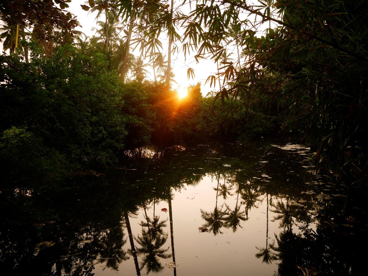 SriLanka OWF-Guesthouse PalmtreesSun